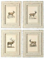 The Kendall Deer Art