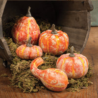 The Roberts set of gourds and pumpkins