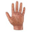 Human Hand Model - UPC Medical Supplies, Inc.