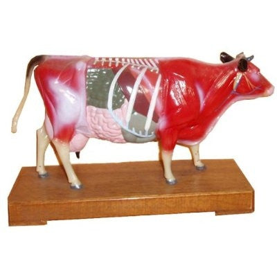 Cow Model - UPC Medical Supplies, Inc.