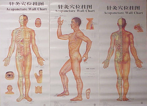 Body Chart of Acupuncture - 3 Laminated Charts