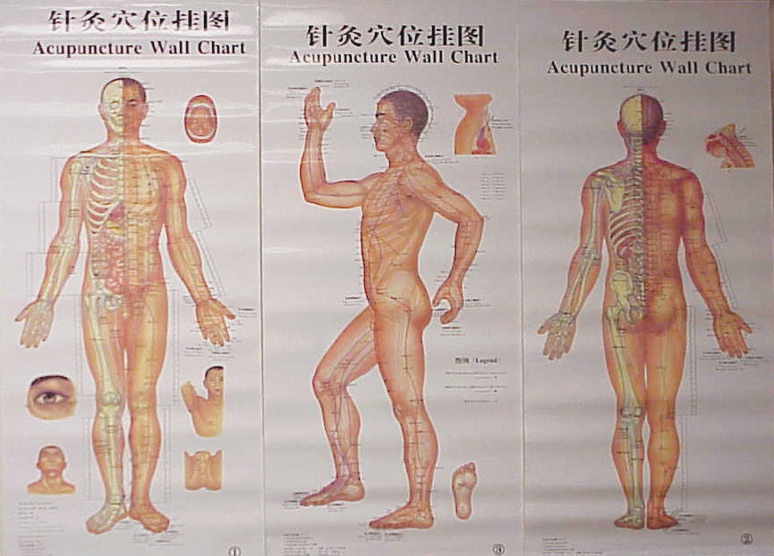 Body Chart Of Acupuncture 3 Laminated Charts Acuwarehouse