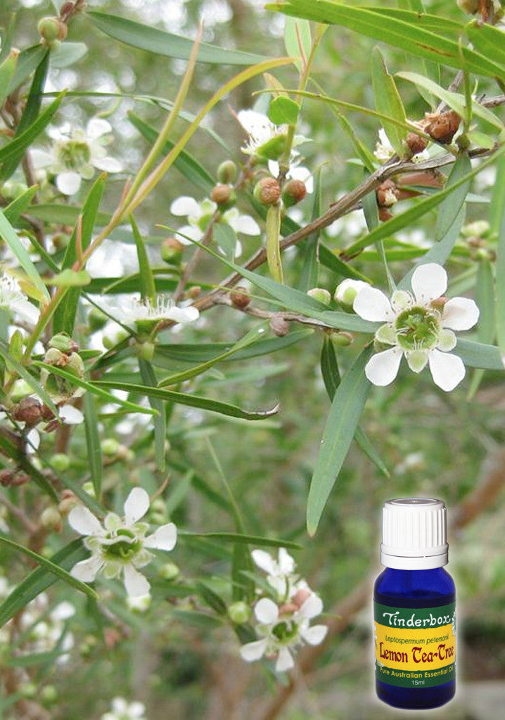 Lemon Tea-Tree Essential Oil 15mL