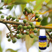 Litsea Cubeba Essential Oil 15mL