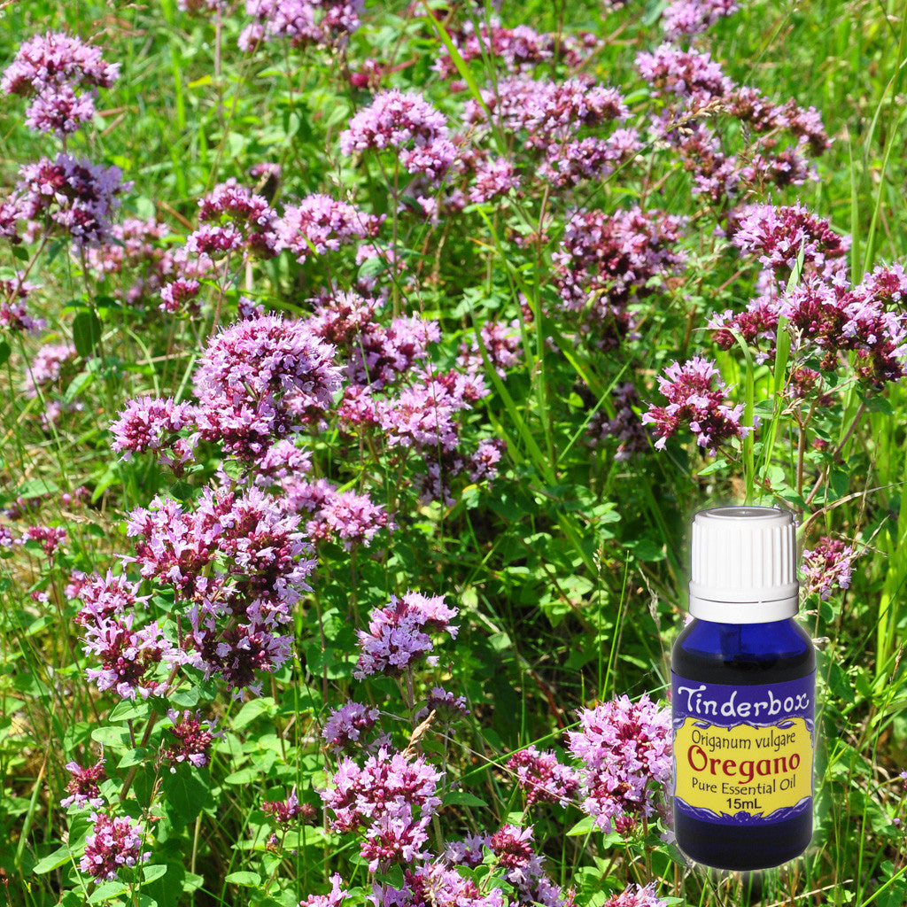 Oregano Essential Oil 15mL