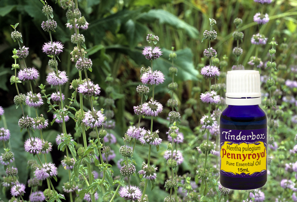 Pennyroyal Essential Oil 15mL