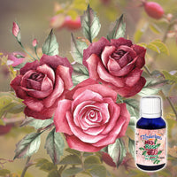 Rose Absolute 5% 15mL