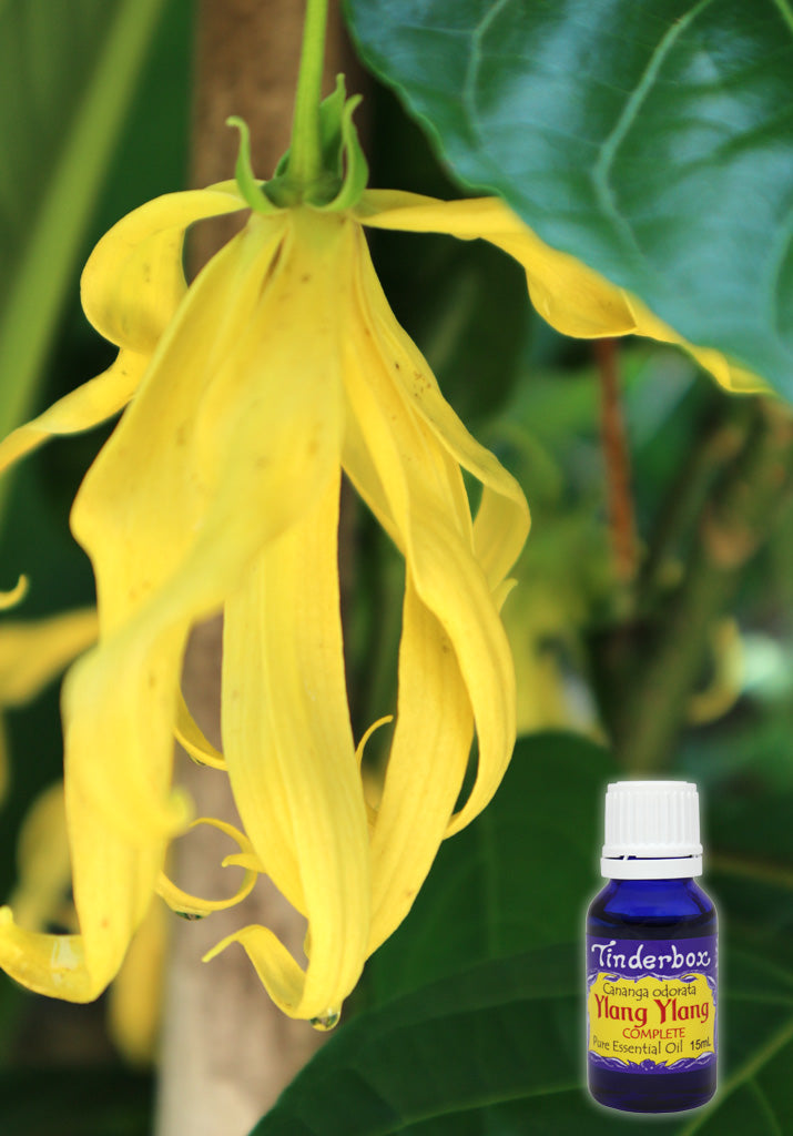 Ylang Ylang Complete Essential Oil 15mL