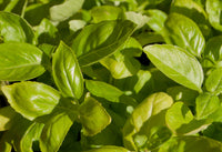 Basil Leaf, Ground 100g