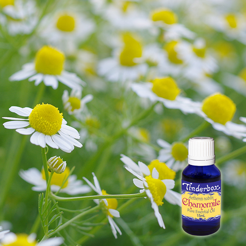 Chamomile Essential Oil 15mL (Roman)