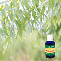 Eucalyptus (Australian) Essential Oil 15mL