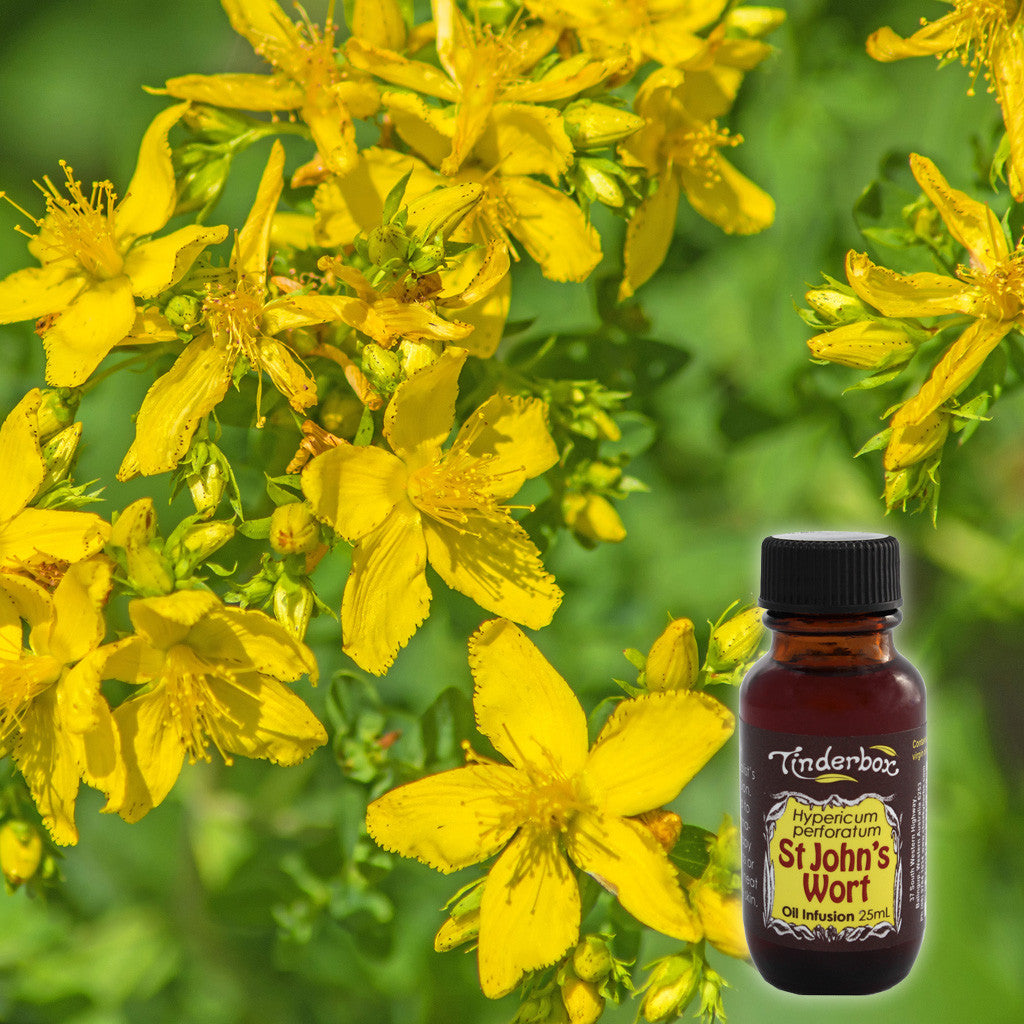 St John's Wort Oil Infusion 25mL