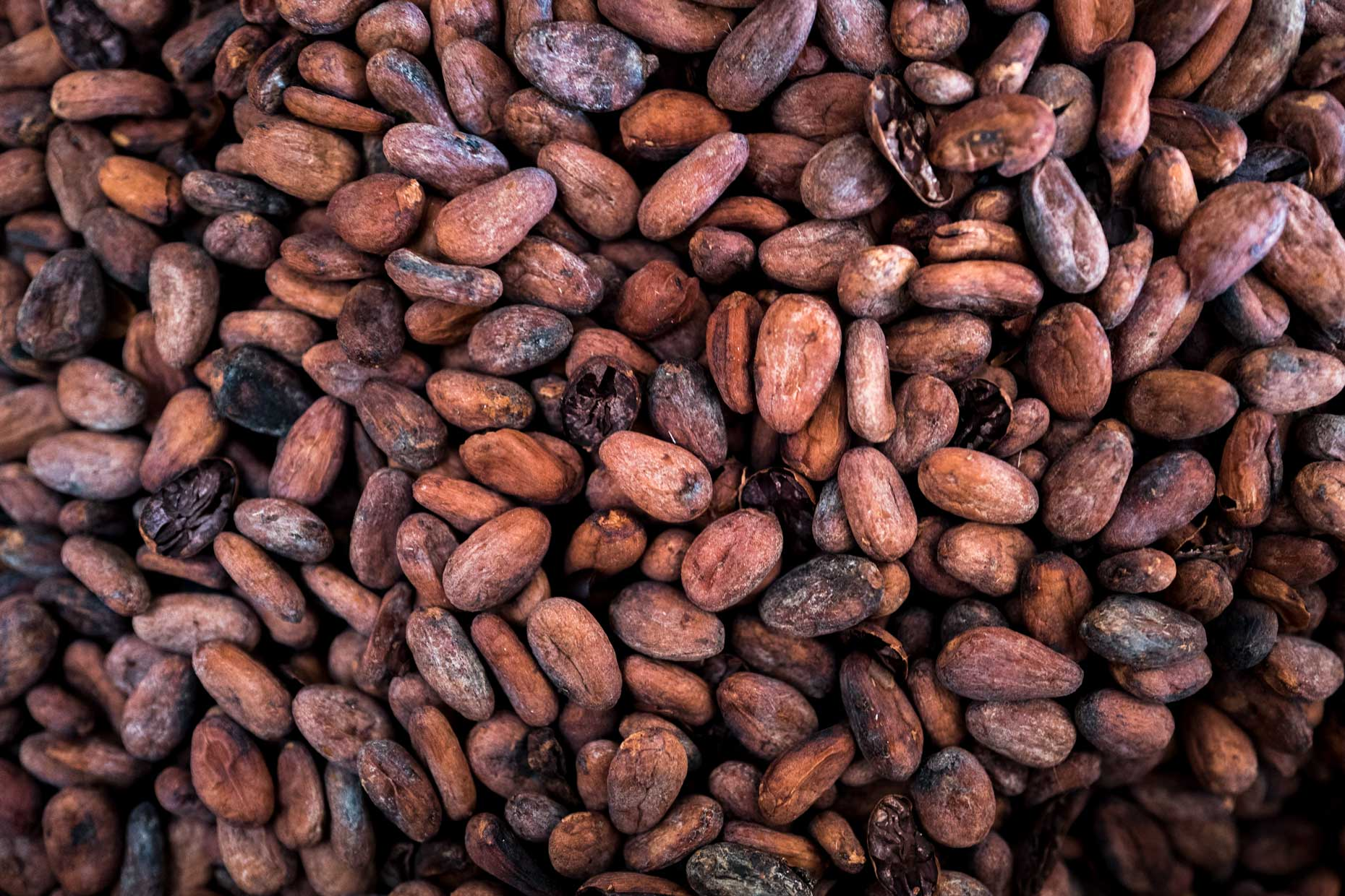 Mayan Cacao Beans | Stories + Objects Global Travel Magazine