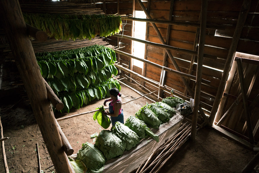 Inside A Cuban Tobacco Plant Farmhouse | Stories + Objects Lifestyle Magazine Online