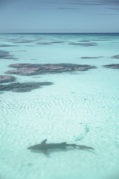 Sharks In The Fakarava Tuamoto Atolls Lagoon Tahiti | Stories + Objects Global Travel Images