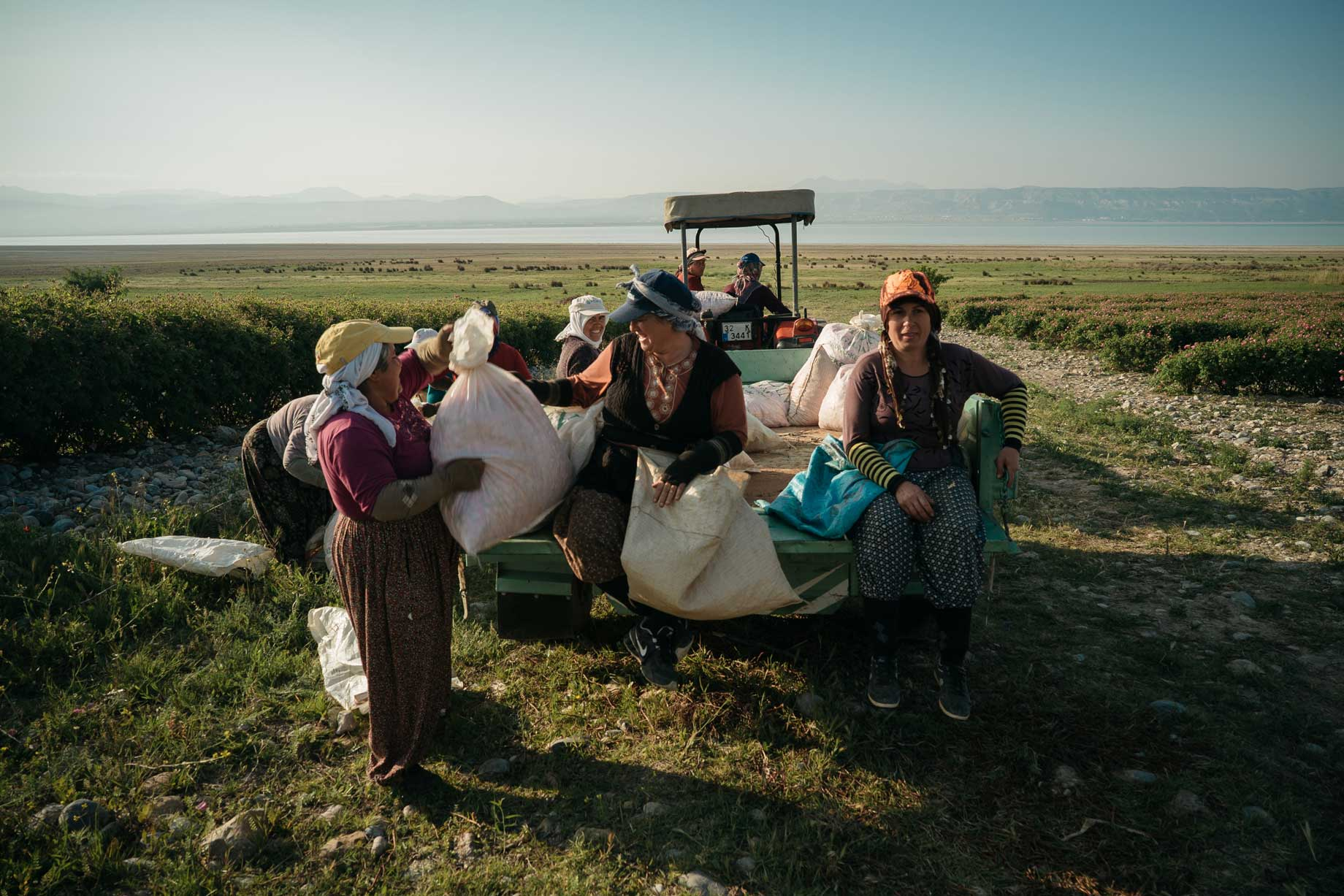 Women Rose Harvesters In Isparta, Turkey | Stories + Objects Lifestyle Travel Magazine