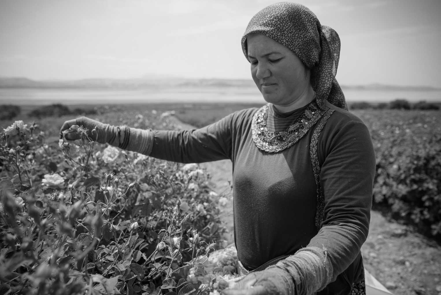 Rose Harvester Esengül Artisoy In Isparta, Turkey | Stories + Objects Lifestyle Magazine