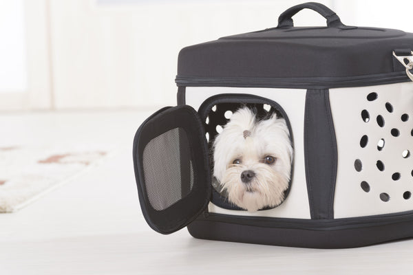 Dog Carriers & Travel
