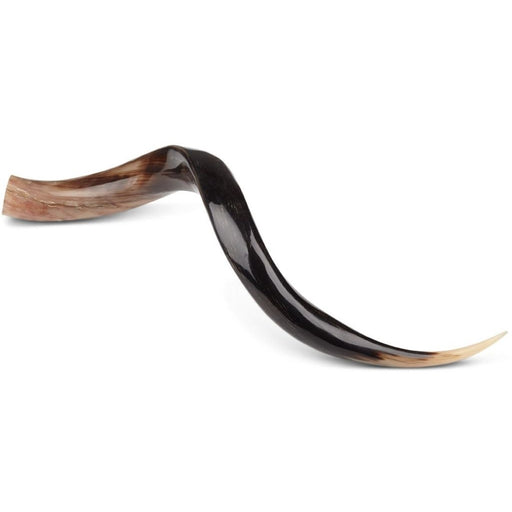 NC Living South african Kudu Horn | Polished Horns Natural