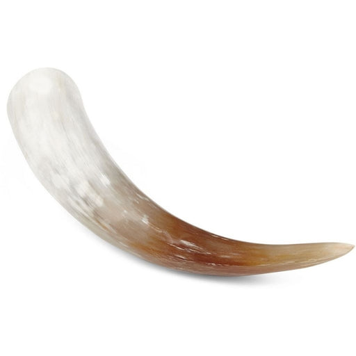 NC Living South african Watusi cow horn | Polished Horns Natural