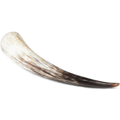 NC Living South african cow horn | Polished | 51+ cm. Horns Natural