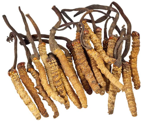 Cultivation of the Magical Cordyceps Mushrooms