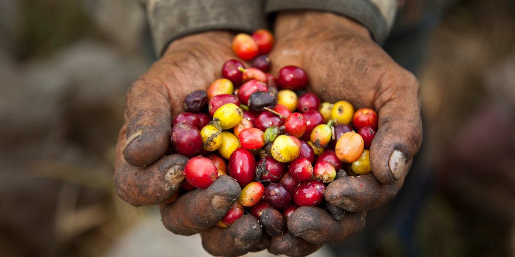 Why Fairtrade isn't fair enough.