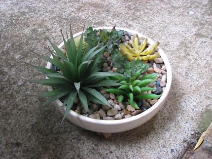 Succulent and Cactus Garden