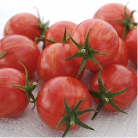 Organic Cherry Tomato 'Pink Bumble Bee' seeds