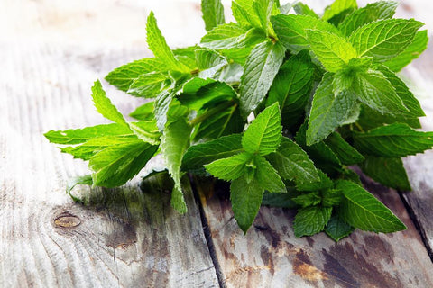 Peppermint (Mentha Piperitta) Heral Heirloom, 160-180 Seeds