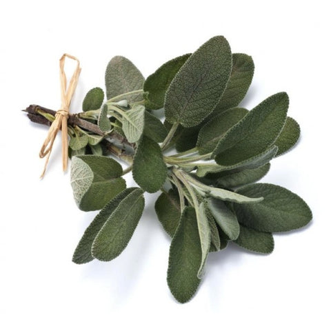 Sage (Salvia officinalis L.) Herbal Plant Seeds, Aromatic Culinary Herb
