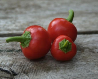 Hot Mini Pepper 'Cherry Hots' (Capsicum Annuum L.) Vegetable Plant Seeds, Medium Early Heirloom