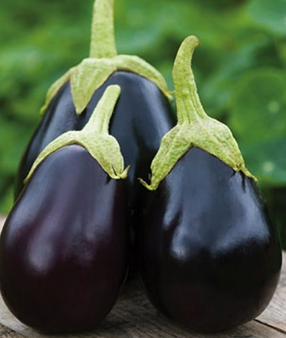 Eggplant 'Black Beauty' (Solanum Melongena L.) Medium Early Vegetable Heirloom, 100 Seeds