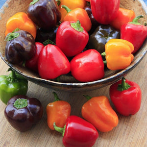 Mini Sweet Bell Pepper Seeds Set