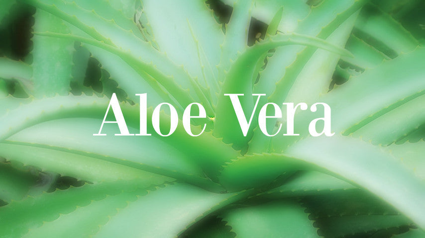 The benefits of Aloe Vera for your skin