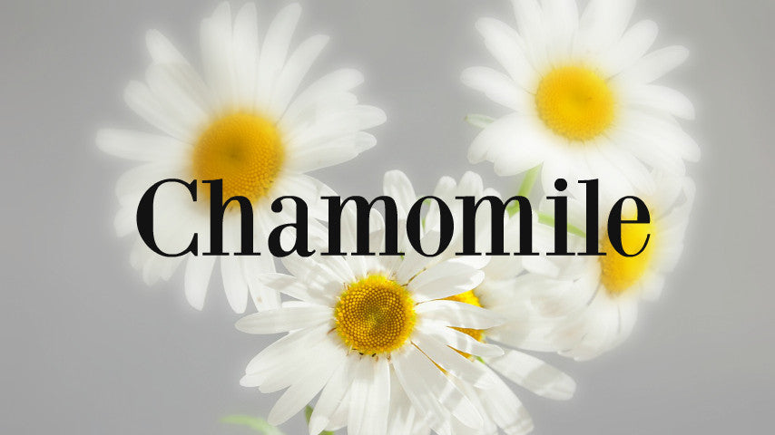 Chamomile the best skincare herb available!