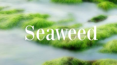 Sea weed antioxidant for skin