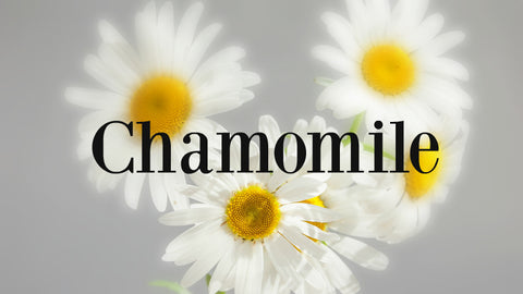 Chamomile good for skin