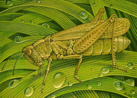 Needlepoint canvas 'Grasshopper'