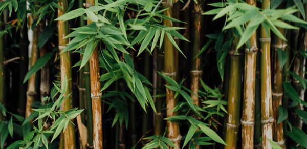 Bamboo and You: The Benefits of Bamboo Sheets