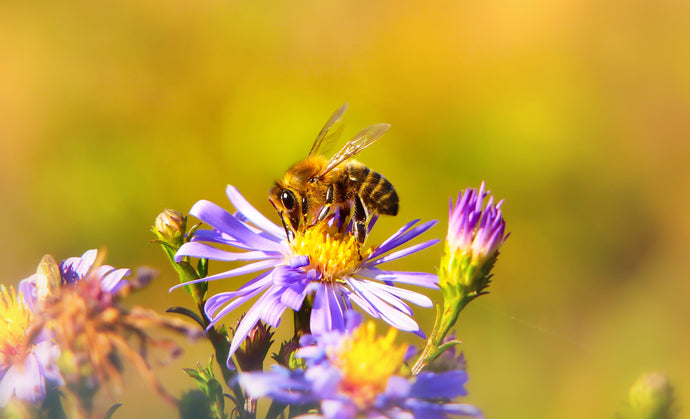 5 Ways to Save the Bees
