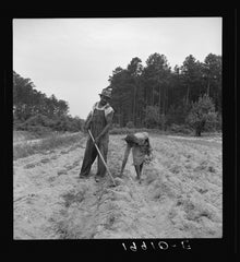 Black sharecroppers in 1939