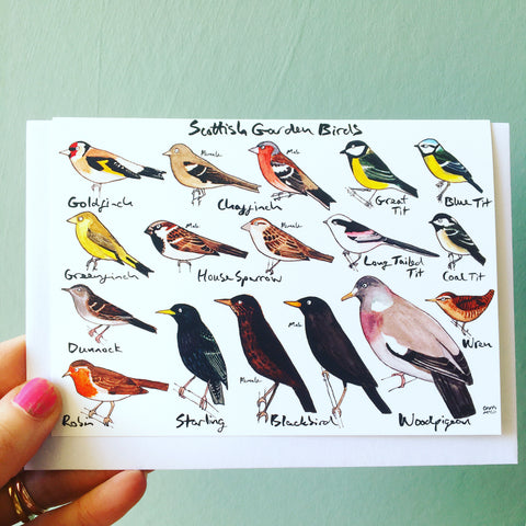 Scottish Garden Birds Card Blank