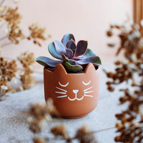 MINI CATS WHISKERS TERRACOTTA PLANTER