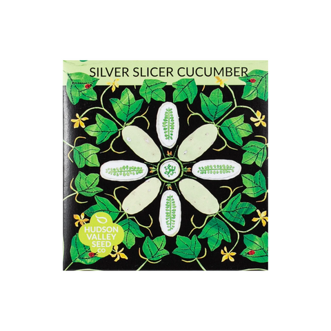 Hudson Valley Seed Co Silver Slicer Cucumber