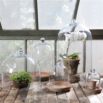Glass Domes without base - Extra Large - Decor - George & Augie