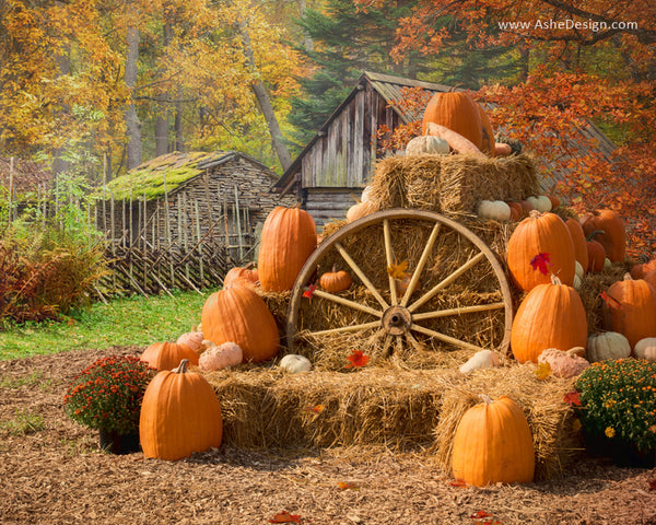 Ashe Design 16x20 Digital Backdrop Set - Autumn Harvest BEFORE
