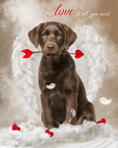 Digital Props 16x20 Backdrop Set - Cupid Pet