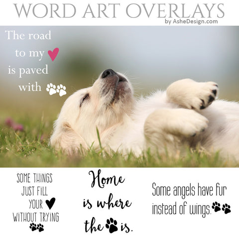 Ashe Design Word Art Overlays - Paw Prints