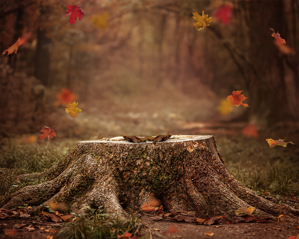 Digital Props 16x20 Backdrop Set - Fall Forest